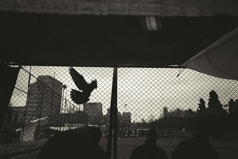 Pigeon market / Голубиный рынок