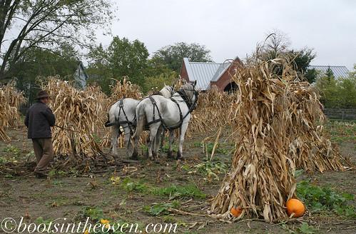 The farmer, as yet unaware of his runaway turkeys