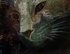 Princesse... (merlinprincesse) Tags: cats cat chat kitty gato pest princesse hehehehe gattini pse9 photoshopelements9