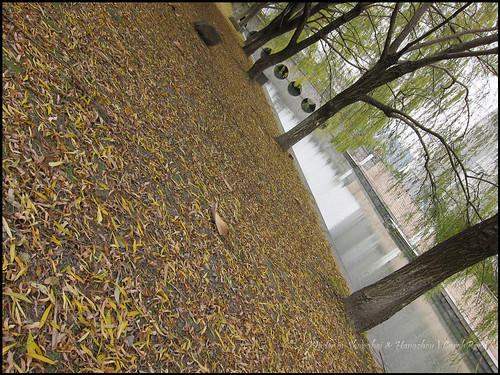 2010-12-08 Shanghai 032P08