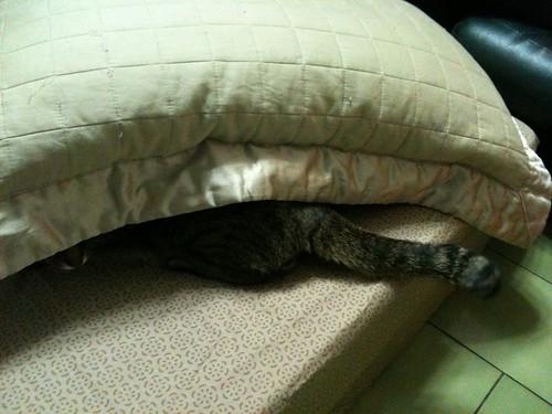躲進枕頭的貓