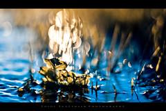 Cold fire - Winter in the Amarone's land  # 6 (Photoskatto) Tags: autumn fall colors leaves foglie composition photoshop canon photography 50mm prime photo reflex flickr dof graphic kodak bokeh f14 14 depthoffield explore crossprocessing acr usm dslr vignetting autunno e6 grafica viraggio composizione breathless prophotographer cs3 bleachbypass cameraraw c41 ef50mmf14usm canonlens ef50mm presets vignettatura kodakc41 postproduzione colorgrading 40d meteringmode centerweightedaverage eos40d canon40d acrpresets exposureprogram kodake6 aperturef14 aperturepriorityae theauthorsplaza luigiscattolin
