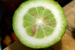 sliced baby lemon 2