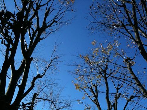 散歩なう。 空気の澄んだふゆの空