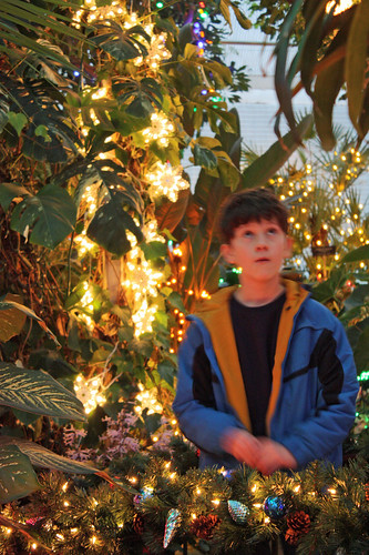 Ross in the Christmas light jungle