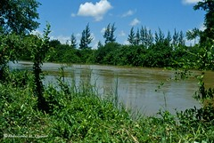 Afgoi, Somalia (aikassim) Tags: river farm agriculture somalia hornofafrica eastafrica   afgooye  afgoi shebeelahahoose shabelleriver wabigashabeelle
