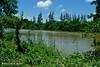 Afgoi, Somalia (aikassim) Tags: river farm agriculture somalia hornofafrica eastafrica مزرعة نهر afgooye الصومال afgoi shebeelahahoose shabelleriver wabigashabeelle