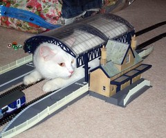 The station cat (Stuart Axe) Tags: station train cat arthur rail railway trains railwaystation railways hornby modelrailway oogauge