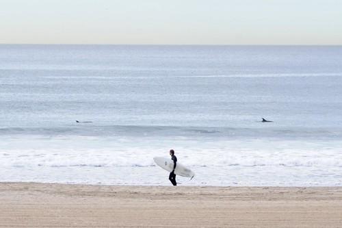 Dolphins Venice Beach