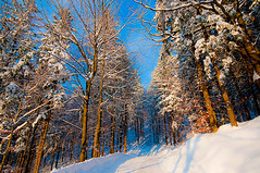 Winter forest (Uros P.hotography) Tags: road trip travel trees winter sunset sky sun snow cold tree tourism nature beautiful clouds forest photoshop wonderful nice fantastic nikon perfect tour superb awesome sigma tourist slovenia journey stunning excellent slovenija lovely incredible 1020 hdr breathtaking turism d300 turist crni vrh photomatix brathtaking slod300