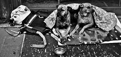 _DSC0435 (federico.lanzini) Tags: people italy dog white black rome roma nikon italia homeless federico altra lanzini altraroma d7000 federicolanzinicom federicolanzini