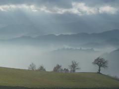 P1000164 (gzammarchi) Tags: italia nuvola natura campagna nebbia albero gesso paesaggio collina raggio quercia livello camminata itinerario casalfiumanesebo