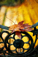 Autumn memories (grazanna) Tags: autumn texture leaves foglie bench memories jesie panchina canon50mm licie awka bestcapturesaoi
