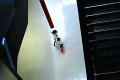 spt (flemma..) Tags: red bw roma childhood museum architecture children punto nikon d70s run spot laser museo rosso architettura rm flemma zahahadid 50mmf18 maxxi cinquantino allrightsreserved raggifotonici mirkogarufi rilieviantropologici museonazionaledelleartidelxxisecolo nnichi salviperunpelo mirkogarufi romacaroccialittletour spt spt