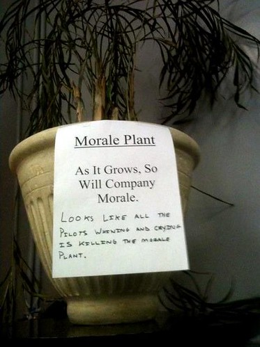 Morale Plant: As it Grows, So Will Company Morale. Looks like all the pilots whining and crying is killing the morale plant.