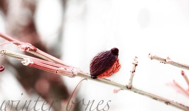 winter bones {4}