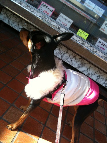 トリミングのあとはいつものお肉屋さんでおやつの催促をする黒犬。