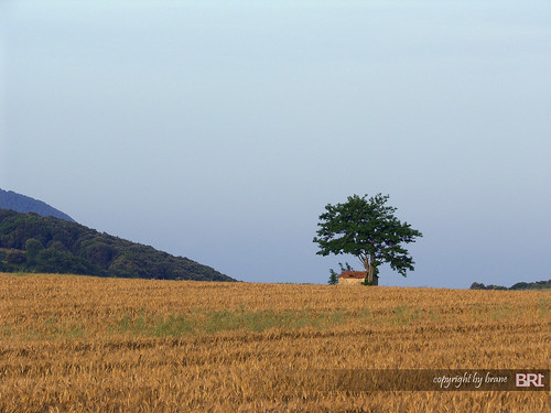 lonely_tree_in Tuscany