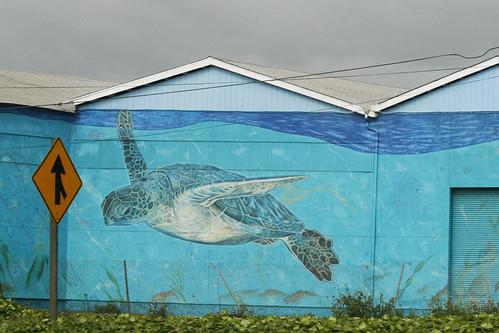 Sea Tortoise Mural