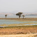 Oromo landscape
