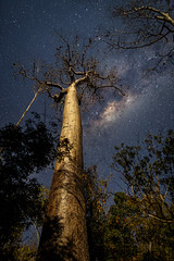 Madagascar (jpmiss) Tags: africa night 24mm samyang jpmiss ciel voielacte afrique stars 6d sky milkyway canon madagascar nuit toiles toliara mg
