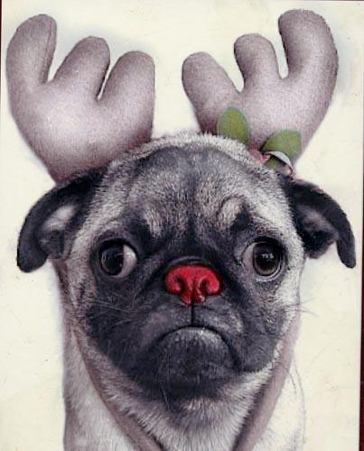 pug nosed reindeer