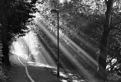 Rays of light (..Peter) Tags: trees light blackandwhite bw film 35mm peace peaceful tranquility nopeople dorset rays footpath bournemouth lightrays raysoflight lightplay tranquillity beamsoflight kartpostal