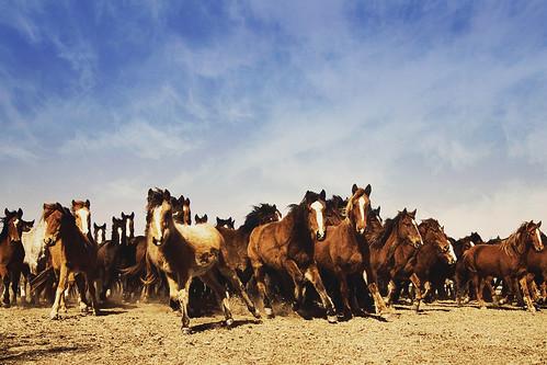 Mustang Edit...