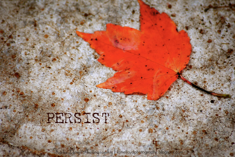 Leaf-Persist-wm