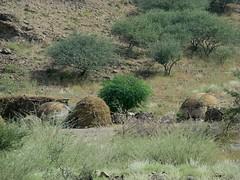 Afar huts (Linda DV) Tags: africa travel people canon geotagged ethiopia 2010 afar powershots5is lindadevolder