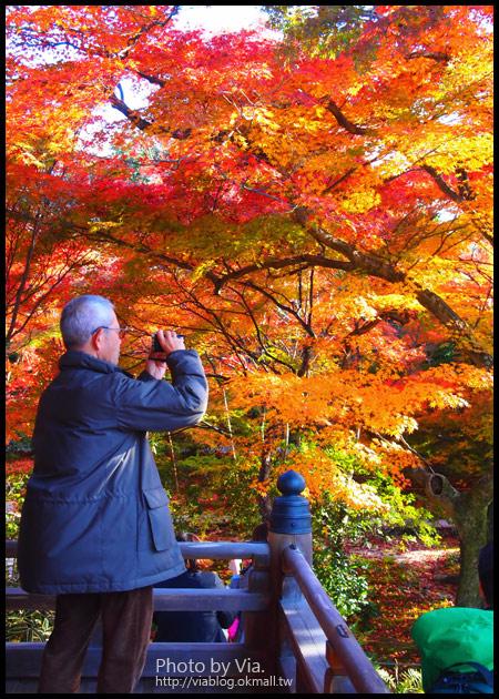 【京阪神自由行】關西賞楓懶人包!大阪、京都、奈良|Via的紅葉美景全記錄♥ (目前收集28個,持續更新中)7-15