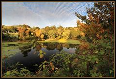 The Pond (LifeLover4) Tags: canon t2i 550d 1022mm oakland pond sunset gravestones blackberries algae efs1022mmf3545usm reflections clouds california ca usa explore explored interesting interestingness circularpolarizer stickneydesign lifelover4 cemetery hughstickney