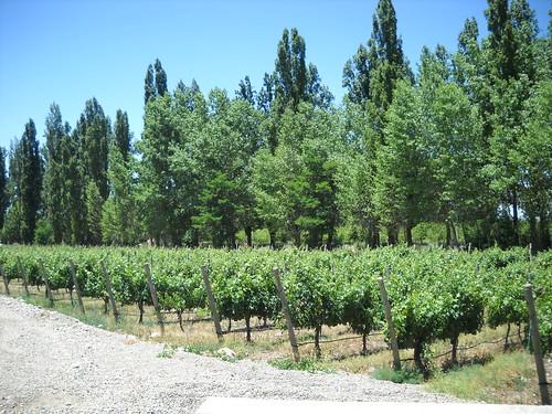 [Mendoza] Paisagem verde
