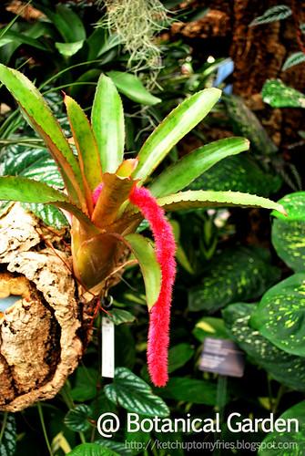 botanical-garden-(4)