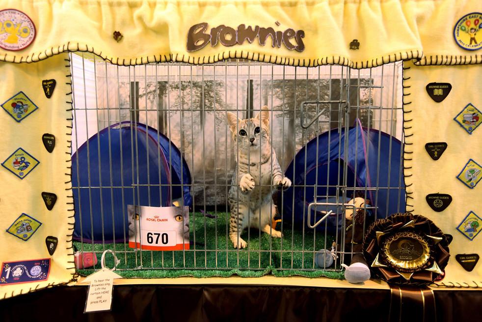 1212 Выставка кошек в Англии