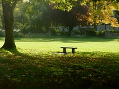 Bench in Windsor (Tasmin_Bahia) Tags: light red orange brown sunlight tree green grass leaves yellow fence bench golden leaf warmth windsor bushes