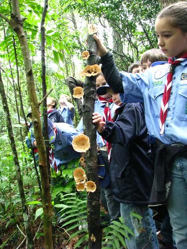 observando fungos