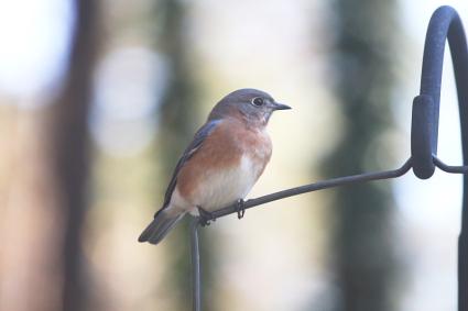 birdsweb010