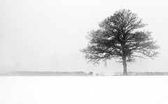 Mist! (Susan SRS) Tags: uk winter england mist snow tree monochrome canon landscape sussex photo blackwhite oak flickr haywardsheath postcard snapshot gb oaktree snowscape sussexsnow image8453