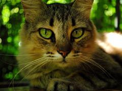 FUSION OF EYES AND PLANTS (Roberta MM) Tags: green cat kitten feline gatos felino eyed