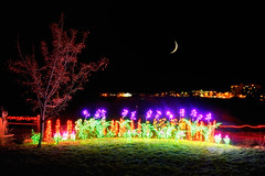 Peak Bloom at the Garden of Lights (Fort Photo) Tags: christmas xmas longexposure flowers moon holiday gardens night landscape lights evening nikon colorado holidays nightscape fortcollins crescent christmaslights led flowerbed co springcreek gardenoflights d700 gardensatspringcreek