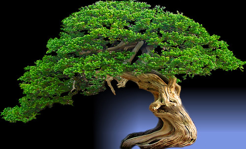 """Bonsai040 • <a style=""""font-size:0.8em;"""" href=""""http://www.flickr.com/photos/30735181@N00/5261338893/"""" target=""""_blank"""">View on Flickr</a>"""