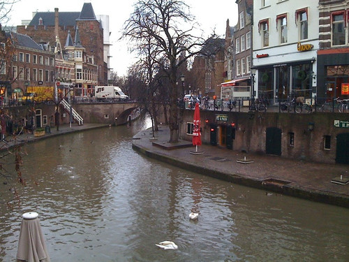 Swans in the Oudegracht