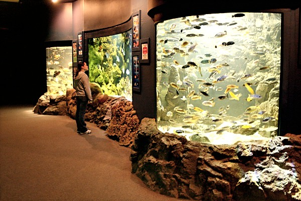 Aquarium at the Wildlife World Zoo