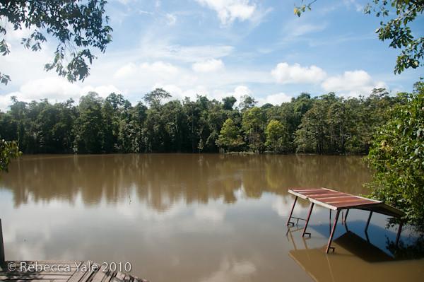 RYALE_Kinabatangan_River_54