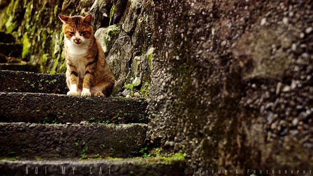 街貓 浪貓 不是我的貓 :: Not my Cat P.1 ::