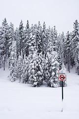No sledding (TomFalconer) Tags: trees winter snow hill powder fresh sledding