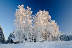Winter day (Markku Heikkil Photography) Tags: gettyimagesfinlandq1