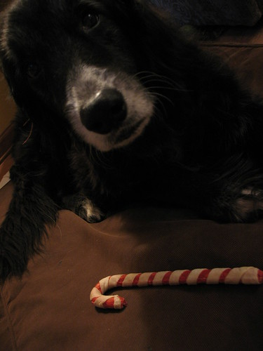 "Old Dog says ""Merry Christmas!"""