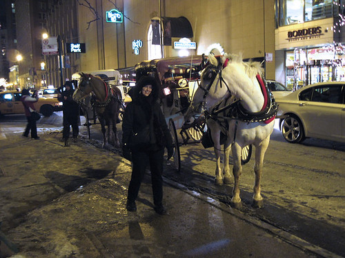 My Friends, the Carriage Horses